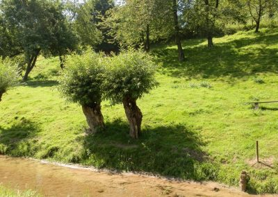 Nejznámější české vrby