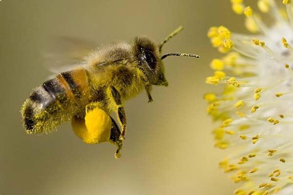 Budou včely chráněny?